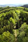 Gernot Singer - Treelogy #2