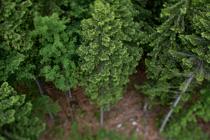 Gernot Singer - Treelogy #3