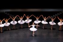 Gernot Singer - White Swans